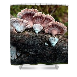 Lovely Lichens Shower Curtain