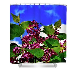 Lovely Lilac Blooms Shower Curtain by Alexas Fotos