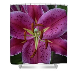 Lovely Lily Shower Curtain by Roberta Byram