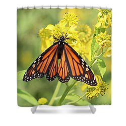Lovely Monarch Shower Curtain