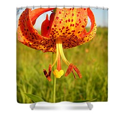 Lovely Orange Spotted Tiger Lily Shower Curtain
