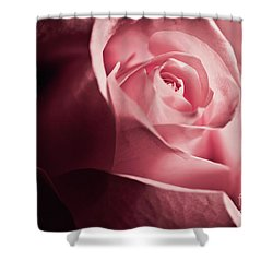 Shower Curtain featuring the photograph Lovely Pink Rose by Micah May
