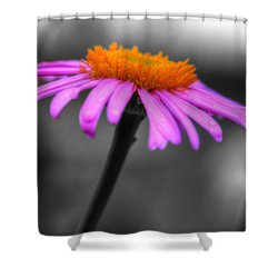 Shower Curtain featuring the photograph Lovely Purple And Orange Coneflower Echinacea by Shelley Neff