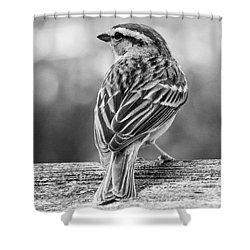 Shower Curtain featuring the photograph Lovely Sparrow by Anita Oakley