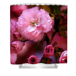 Shower Curtain featuring the photograph Lovely Spring Pink Cherry Blossoms by Shelley Neff