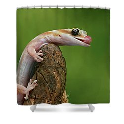 Shower Curtain featuring the photograph Lovely Water - Velvet Gecko by Nikolyn McDonald