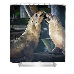 Harbor Seals Lovers Quarrel Shower Curtain by James Hammond
