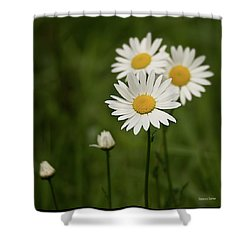 Loves Me, Loves Me Not Shower Curtain