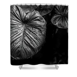 Shower Curtain featuring the photograph Low Key Nature Background, Textured Plants, Leaves For Decorativ by Jingjits Photography