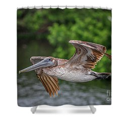 Low Pass Pelican #1 Shower Curtain
