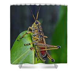Lubber Grasshopper Shower Curtain by Richard Rizzo