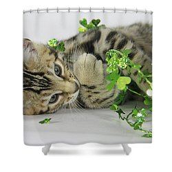 Lucky Kitten Shower Curtain by Shoal Hollingsworth