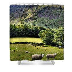 Lucky Sheep Shower Curtain