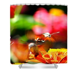 Lucky Shot Shower Curtain by Ana Maria Edulescu