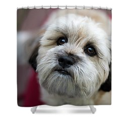 Lucy 2 Shower Curtain