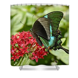 Luminescence Shower Curtain by David Lee Thompson