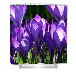 Shower Curtain featuring the photograph Luminous Floral Geometry by Byron Varvarigos