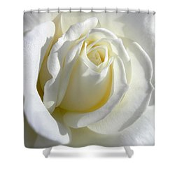 Luminous Ivory Rose Shower Curtain by Jennie Marie Schell