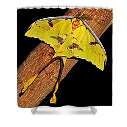 Shower Curtain featuring the photograph Luna Moth by Judy Vincent