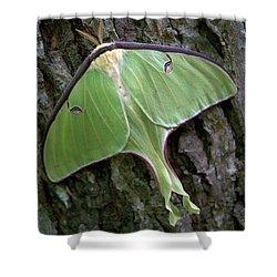 Luna Moth Shower Curtain by Marie Hicks