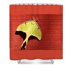 Luna Moth On Red Barn Shower Curtain by Sheila Brown