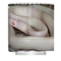 Luna White Snake Shower Curtain by Patricia McNaught Foster