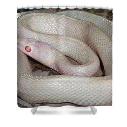 Luna White Snake Shower Curtain