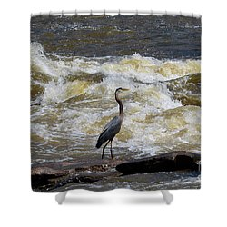 Lunch In The James River 1 Shower Curtain