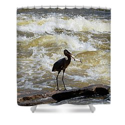 Lunch In The James River 10 Shower Curtain
