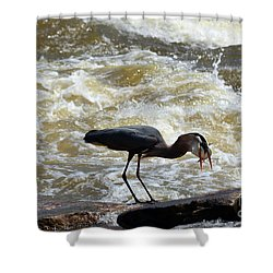 Lunch In The James River 12 Shower Curtain