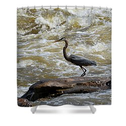 Lunch In The James River 3 Shower Curtain