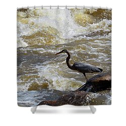 Lunch In The James River 5 Shower Curtain
