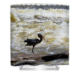 Lunch In The James River 8 Shower Curtain