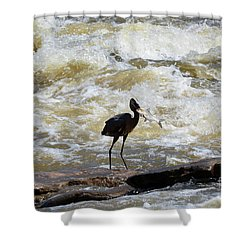 Lunch In The James River 9 Shower Curtain