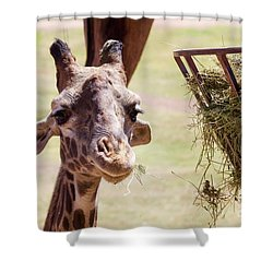 Lunch Time Shower Curtain by Afrodita Ellerman