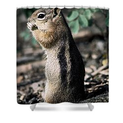 Lunchtime For Ground Squirrel Shower Curtain by Sally Weigand