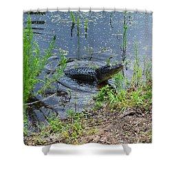 Lunging Bull Gator Shower Curtain by Warren Thompson
