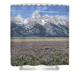 Lupine And Grand Tetons Shower Curtain