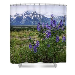 Lupine Beauty Shower Curtain