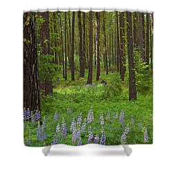 Lupine Carpet Shower Curtain by Mike  Dawson