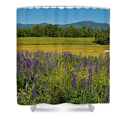 Shower Curtain featuring the photograph Lupine Festival by Brenda Jacobs