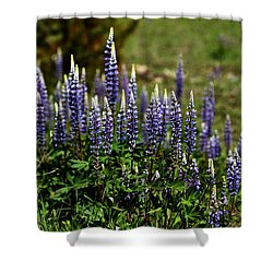 Lupine In Montana 2 Shower Curtain