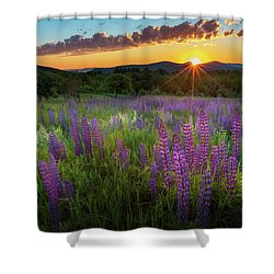 Shower Curtain featuring the photograph Lupine Lumination by Bill Wakeley