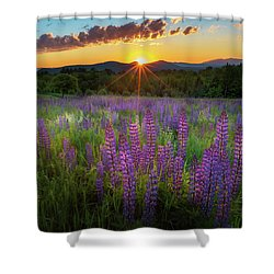 Lupine Lumination Square Shower Curtain