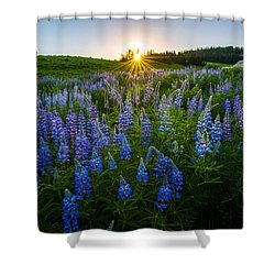Shower Curtain featuring the photograph Lupine Meadow by Dustin  LeFevre