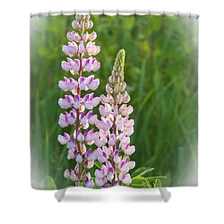 Shower Curtain featuring the photograph Lupine Pair by Paul Miller