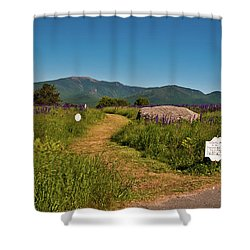 Shower Curtain featuring the photograph Lupine Path To The Notch by Brenda Jacobs