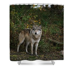 Shower Curtain featuring the photograph Lupine Pose by Shari Jardina