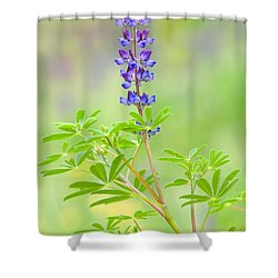Shower Curtain featuring the photograph Lupine by Ram Vasudev