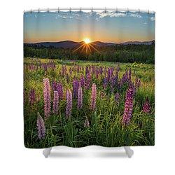 Lupine Sunrise Shower Curtain